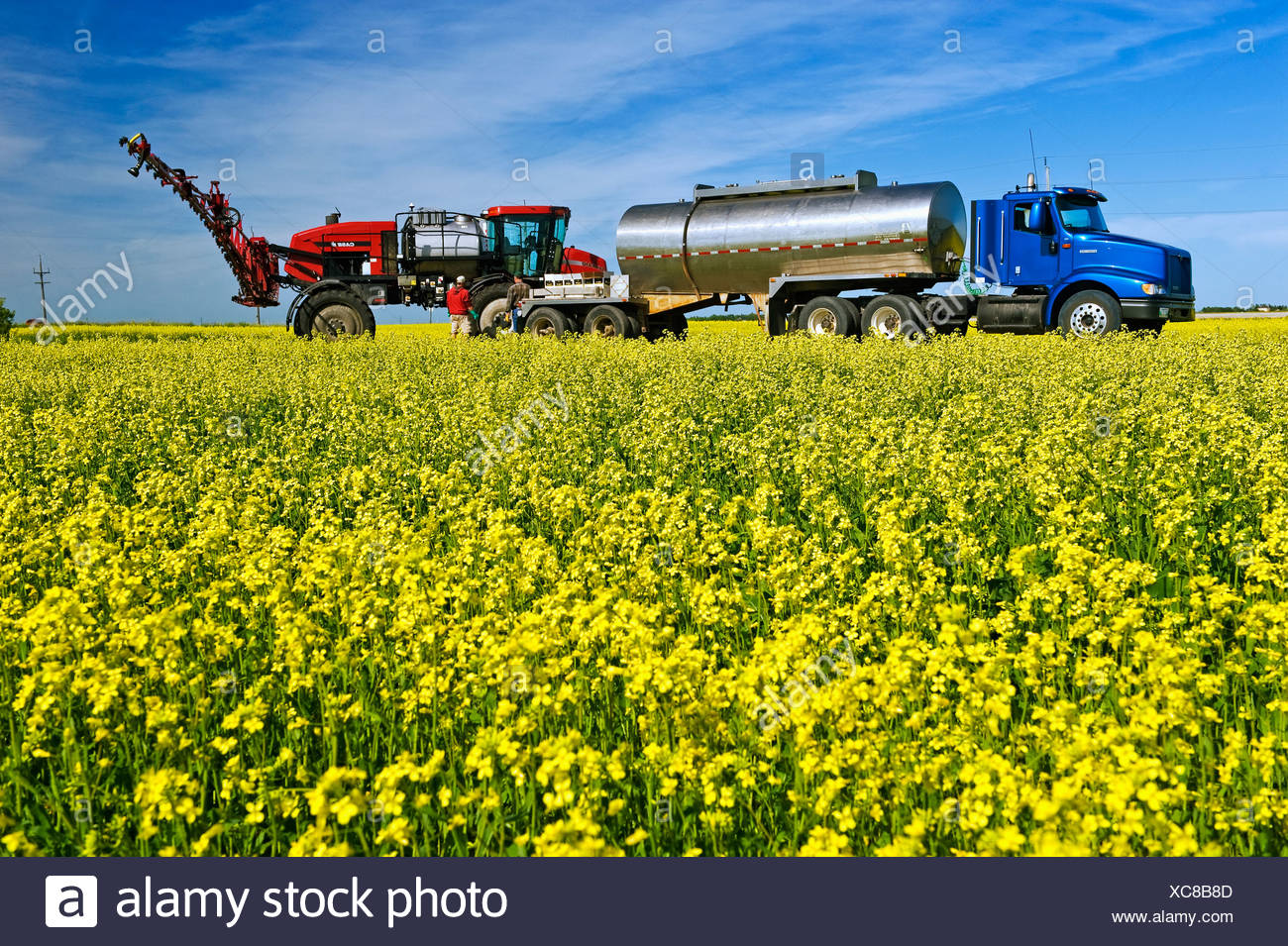 A farmer loads his high clearance sprayer with fungicide and water to spray a blooming canola crop for Sclerotinia / Canada. - Stock Image