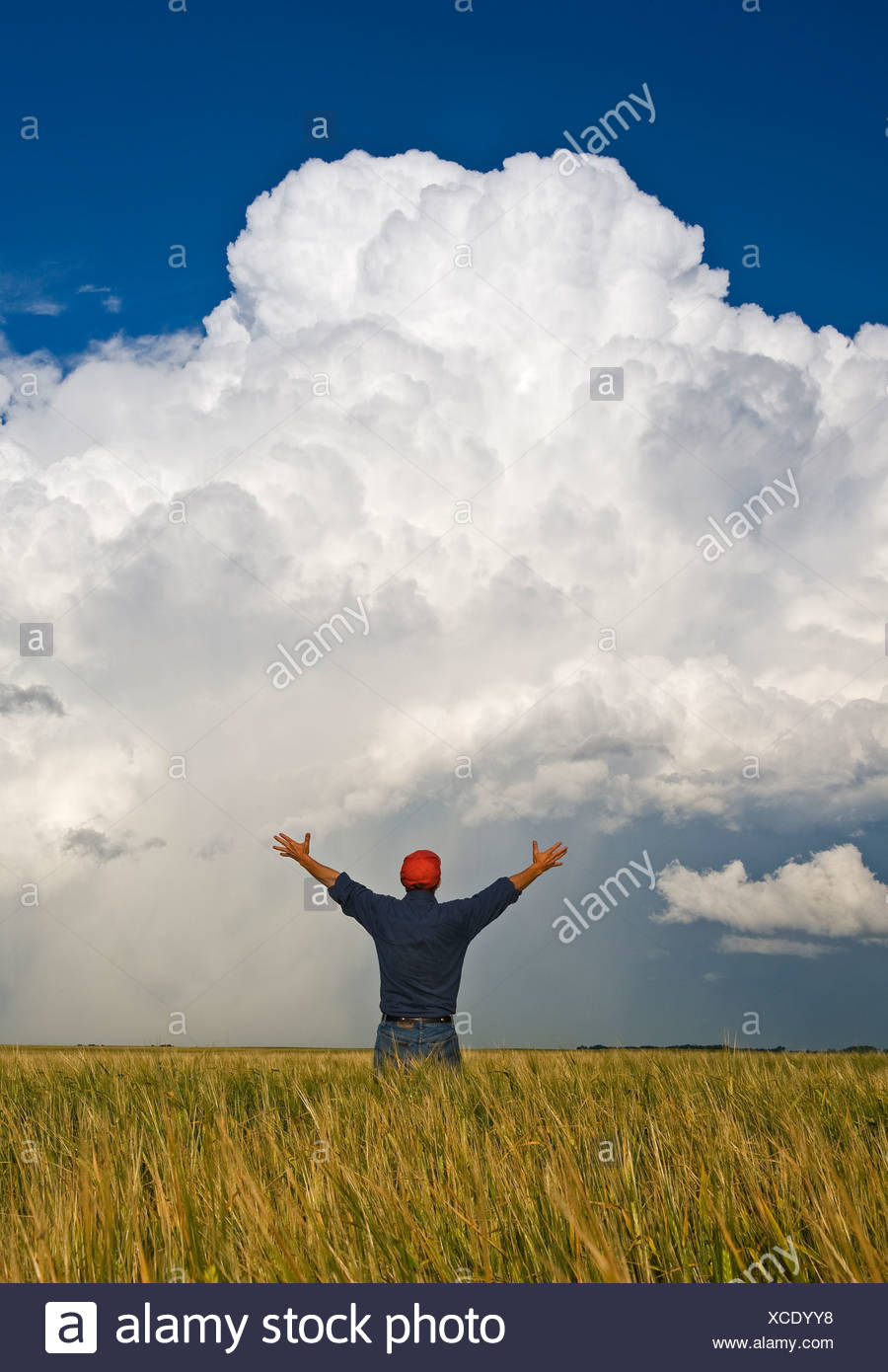 A man looks out over a barley field with a cumulonimbus supercell cloud, Bromhead, Saskatchewan, Canada - Stock Image