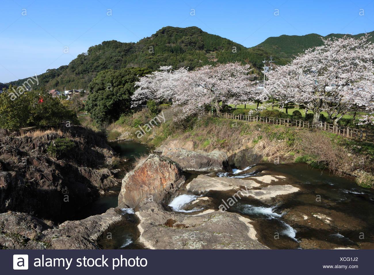 Cherry Blossoms of Todoroki Waterfall Park, Ureshino, Saga, Japan - Stock Image