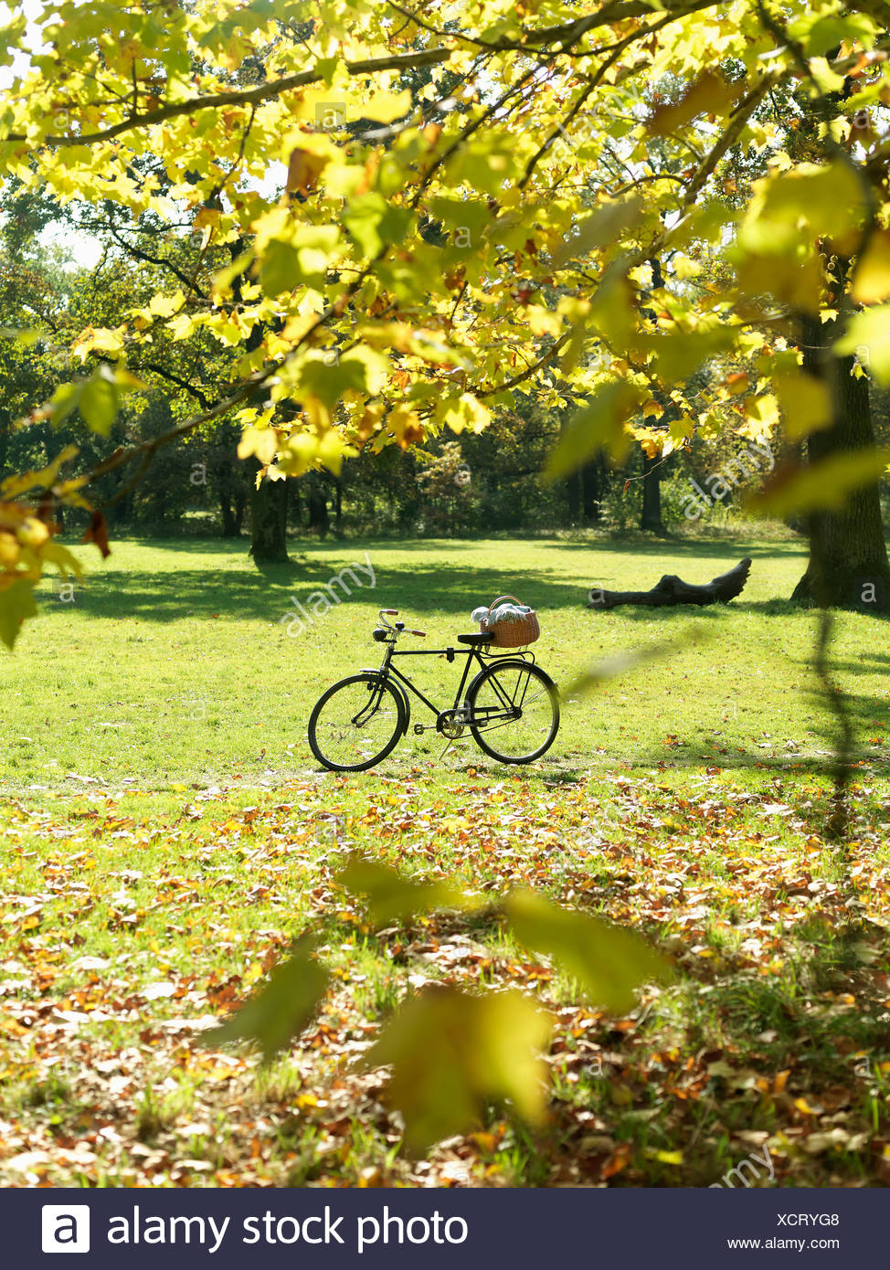Bicycle left in Autumn field with leaves - Stock Image