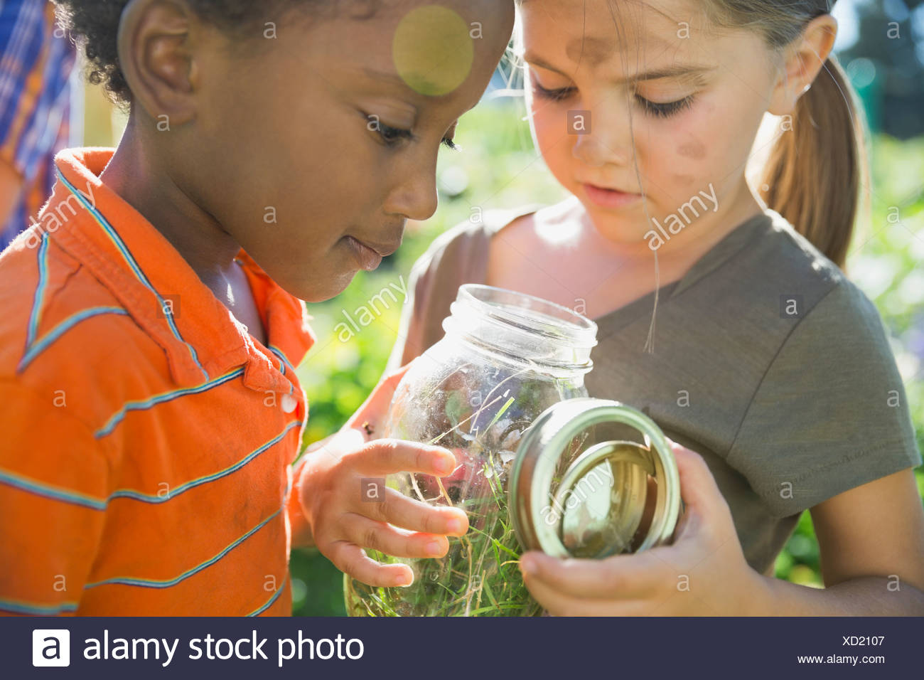 Kids looking at bugs in jar - Stock Image