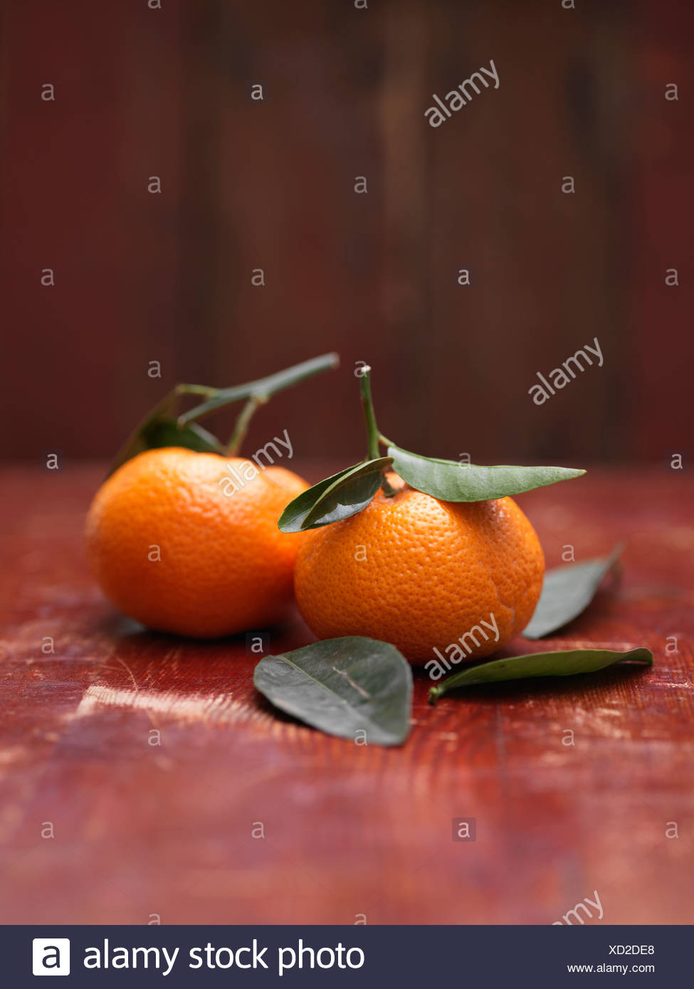 Satsumas with stems and leaves - Stock Image
