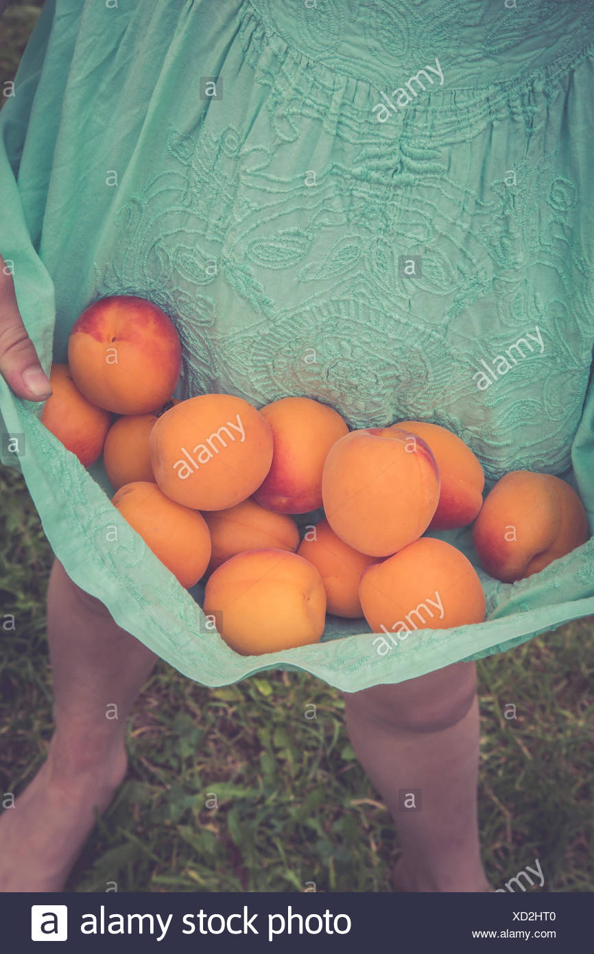 Little girl carrying apricots with her dress, partial view - Stock Image