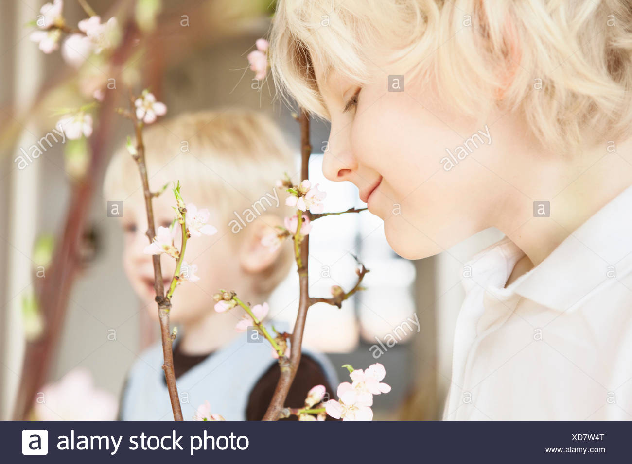 Close up of two brothers and blossom twigs in sitting room - Stock Image