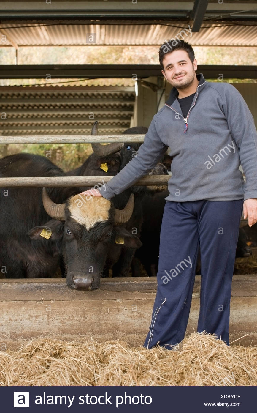 Bisons for mozzarella production - Stock Image