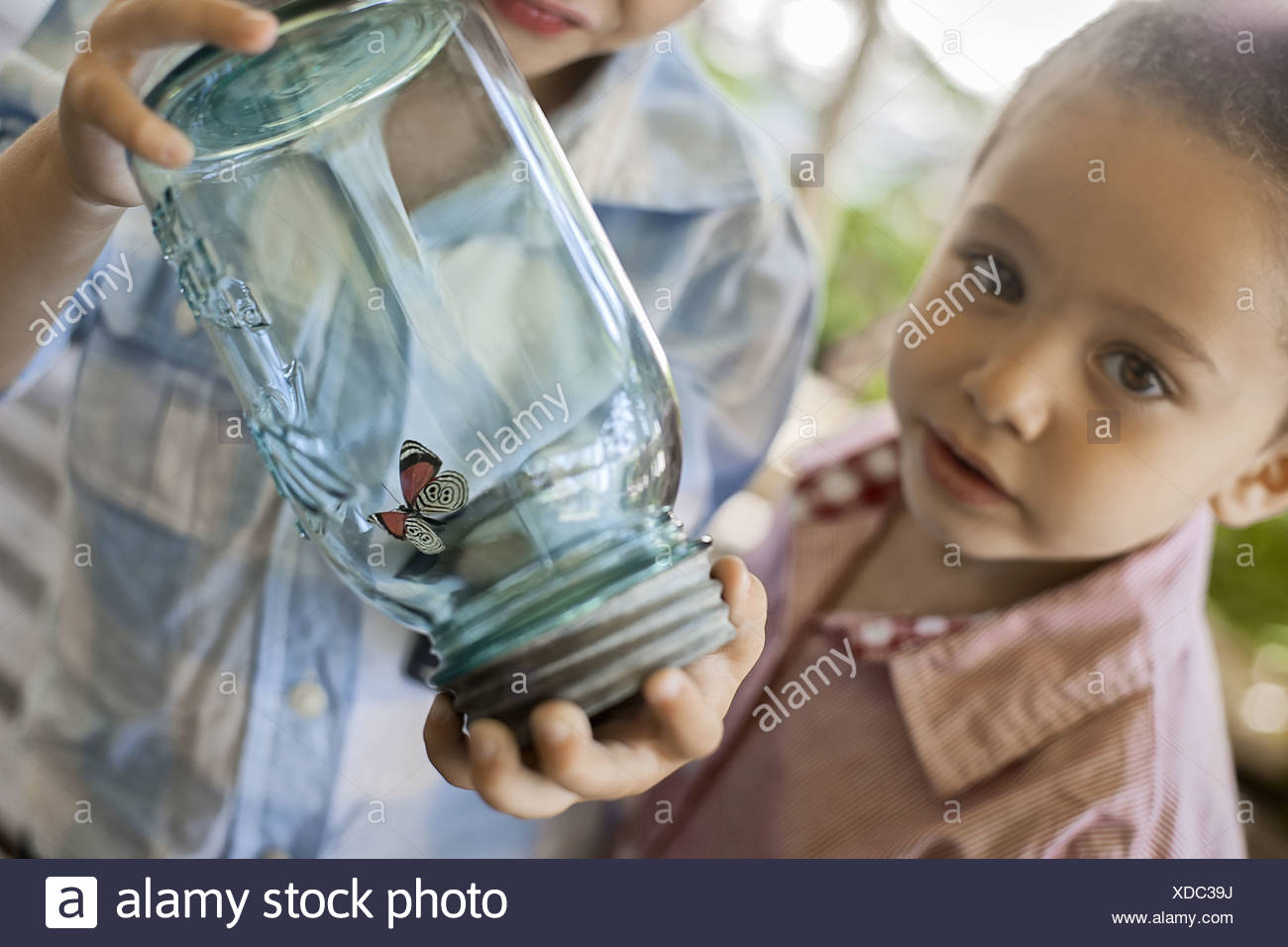 Utah USA child holding glass jar and examining butterfly - Stock Image