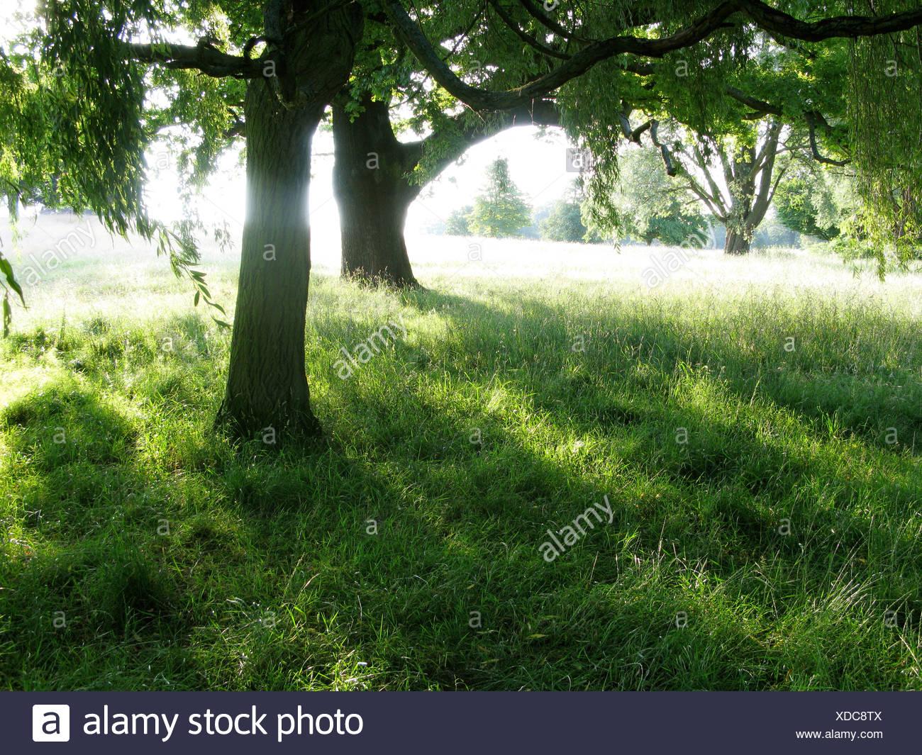 Sun shining through trees in summertime - Stock Image