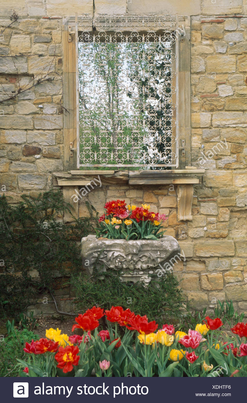 Red And Yellow Tulips In Spring Garden Border Below Wrought Iron Screen  Over Window In Stone Wall