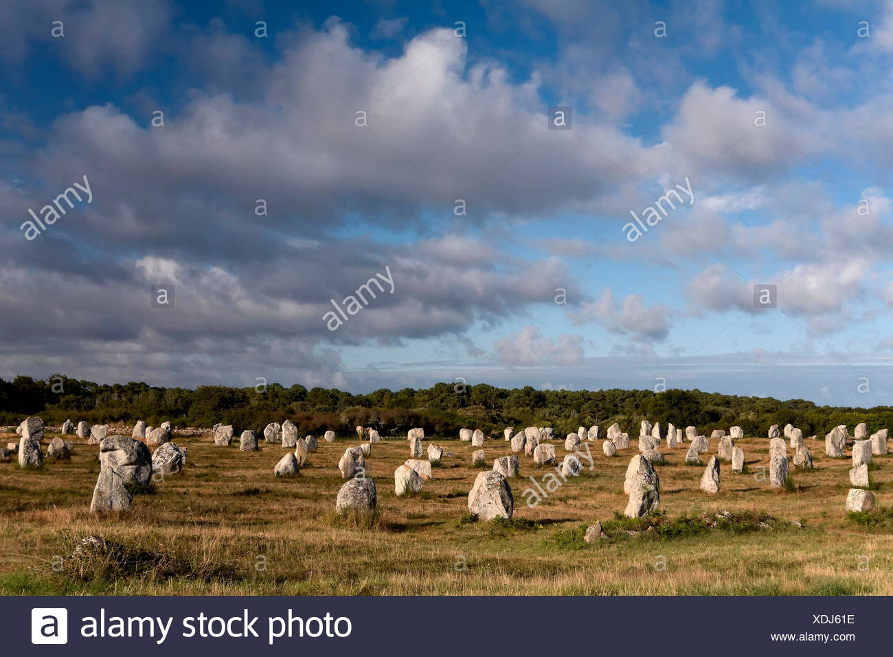 Carnac, Brittany, France, Megaliths in Carnac - Stock Image