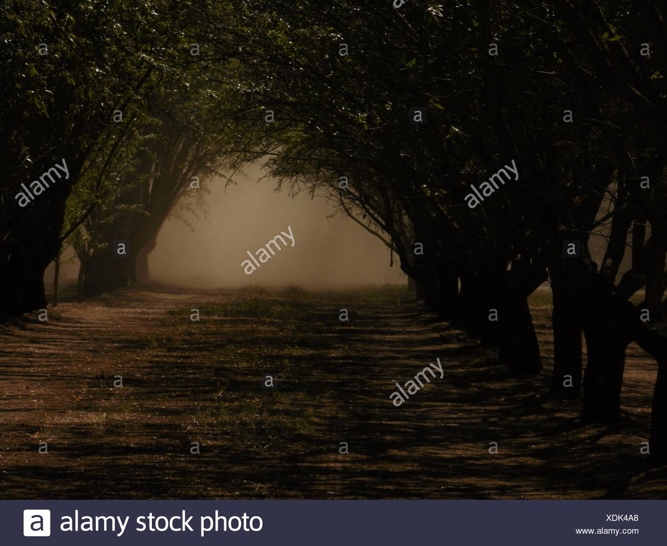 Trees Both Sides Of A Road - Stock Image