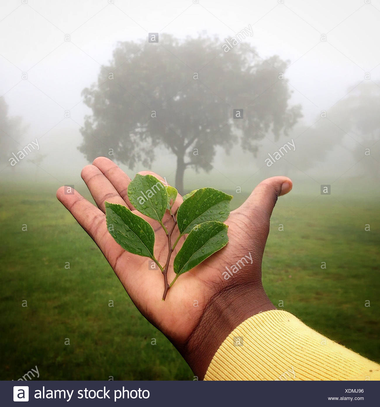 Human hand holding plant with tree in background, Gauteng, Johannesburg, South Africa - Stock Image