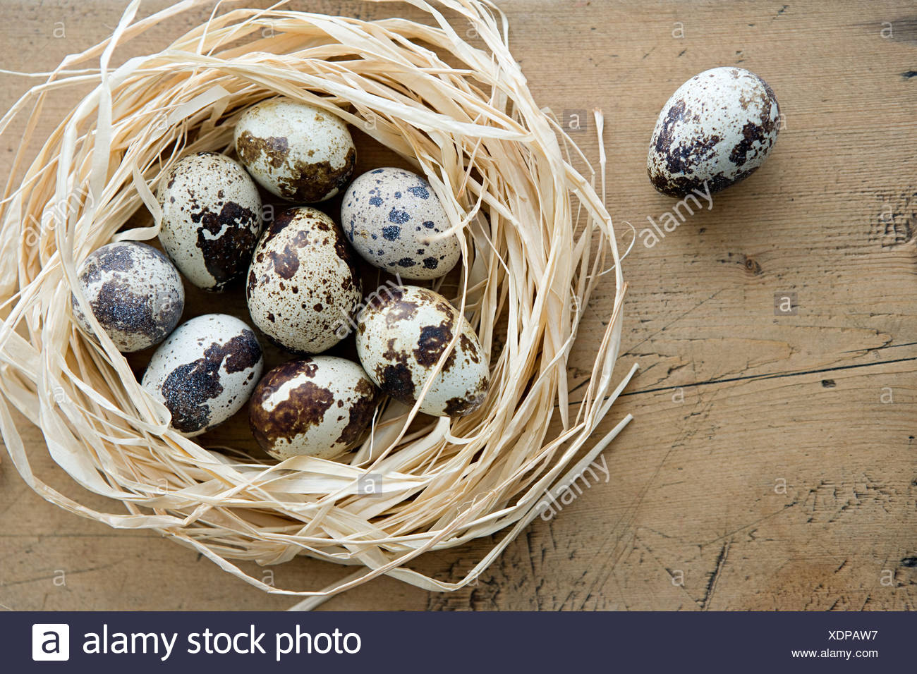A nest quails eggs with one alone - Stock Image