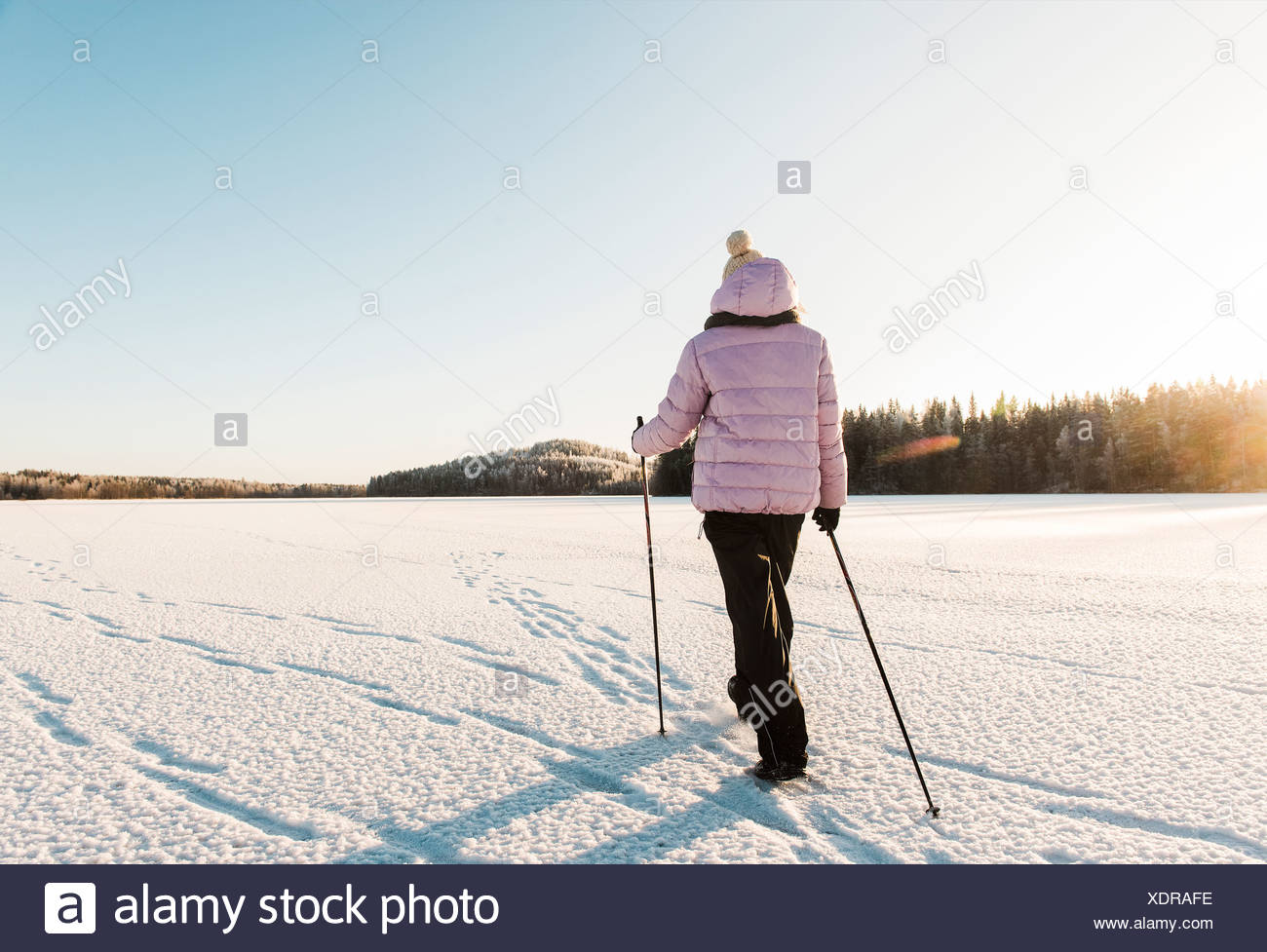 Woman nordic walking through snow covered field - Stock Image