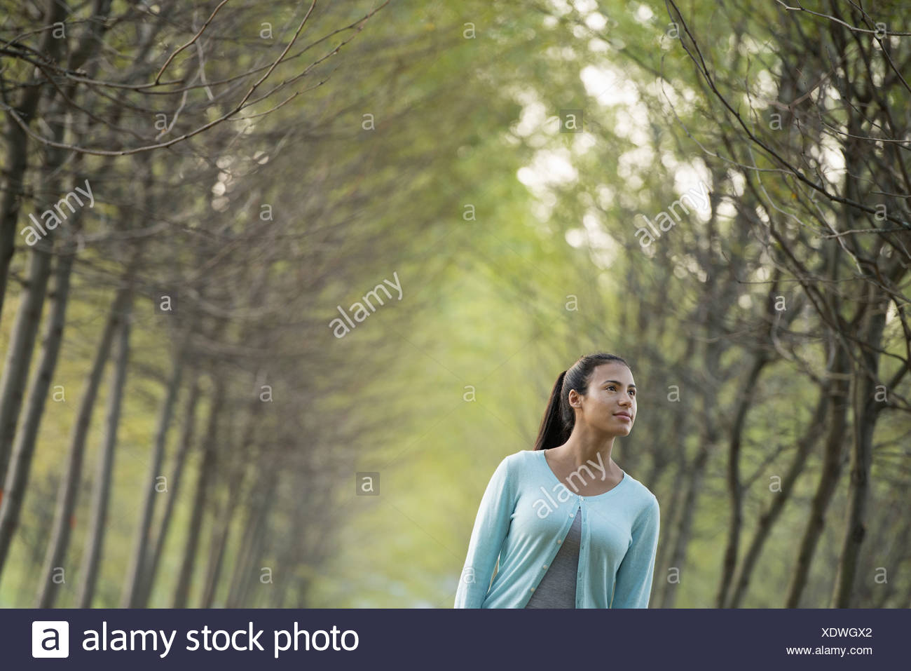 A woman between two rows trees looking upwards. - Stock Image