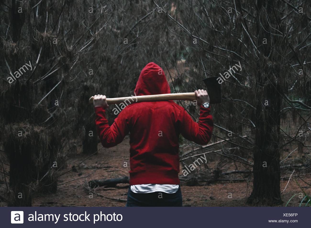 Rear View Of Person In Hooded Shirt Walking In Belanglo State Forest - Stock Image
