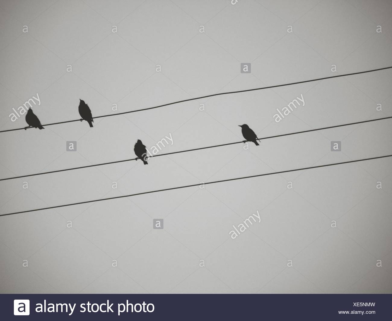 Low Angle View Of Silhouette Birds Perching On Power Lines Against Sky - Stock Image