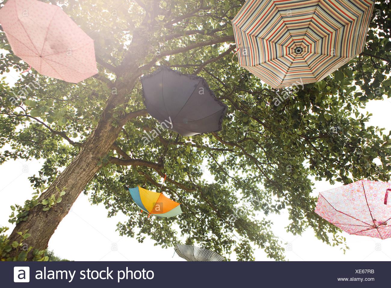 Umbrellas hanging in trees - Stock Image