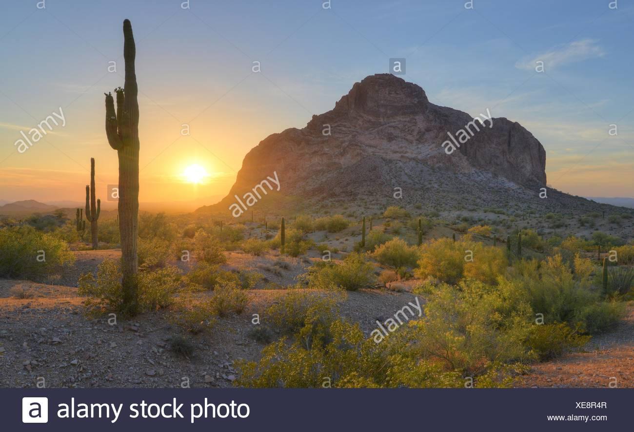 USA, Arizona, Eagletail Mountains Wilderness, Springtime Sunrise in Desert - Stock Image