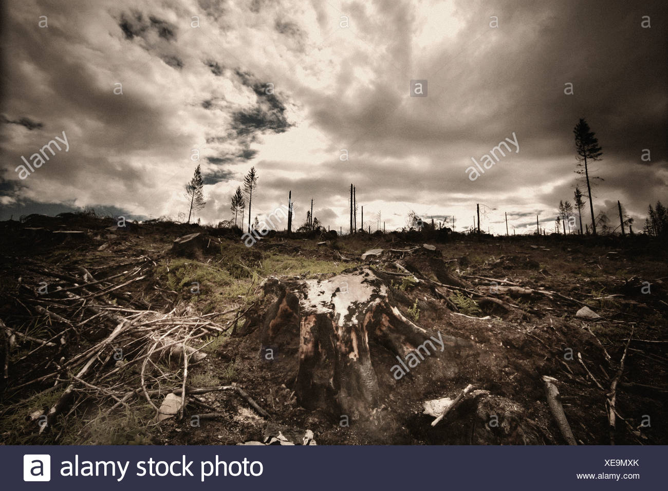 logging - Stock Image