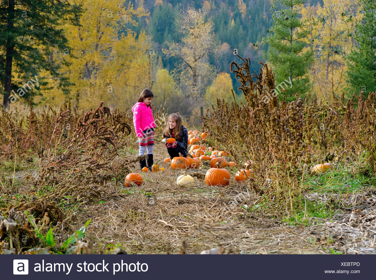 Young sisters selecting pumpkins in pumpkin patch Green Croft Gardens in Grindrod in Shuswap region British Columbia Canada - Stock Image