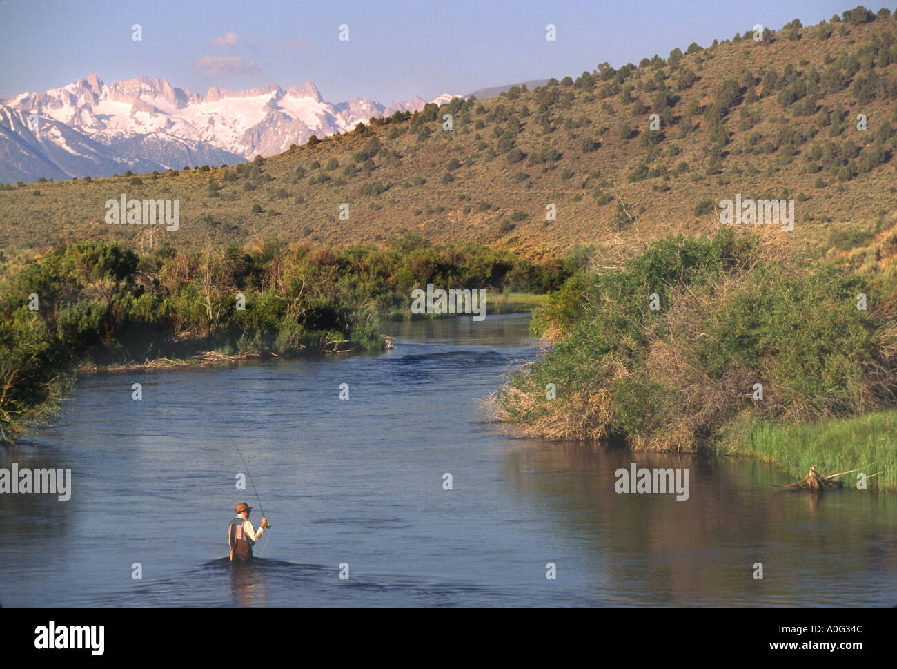 Man fly fishing for trout on the east walker river model for Walker river fishing