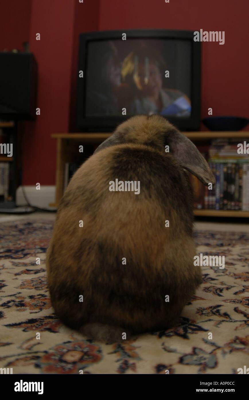 Rabbit Watching Tv Stock Photo Royalty Free Image