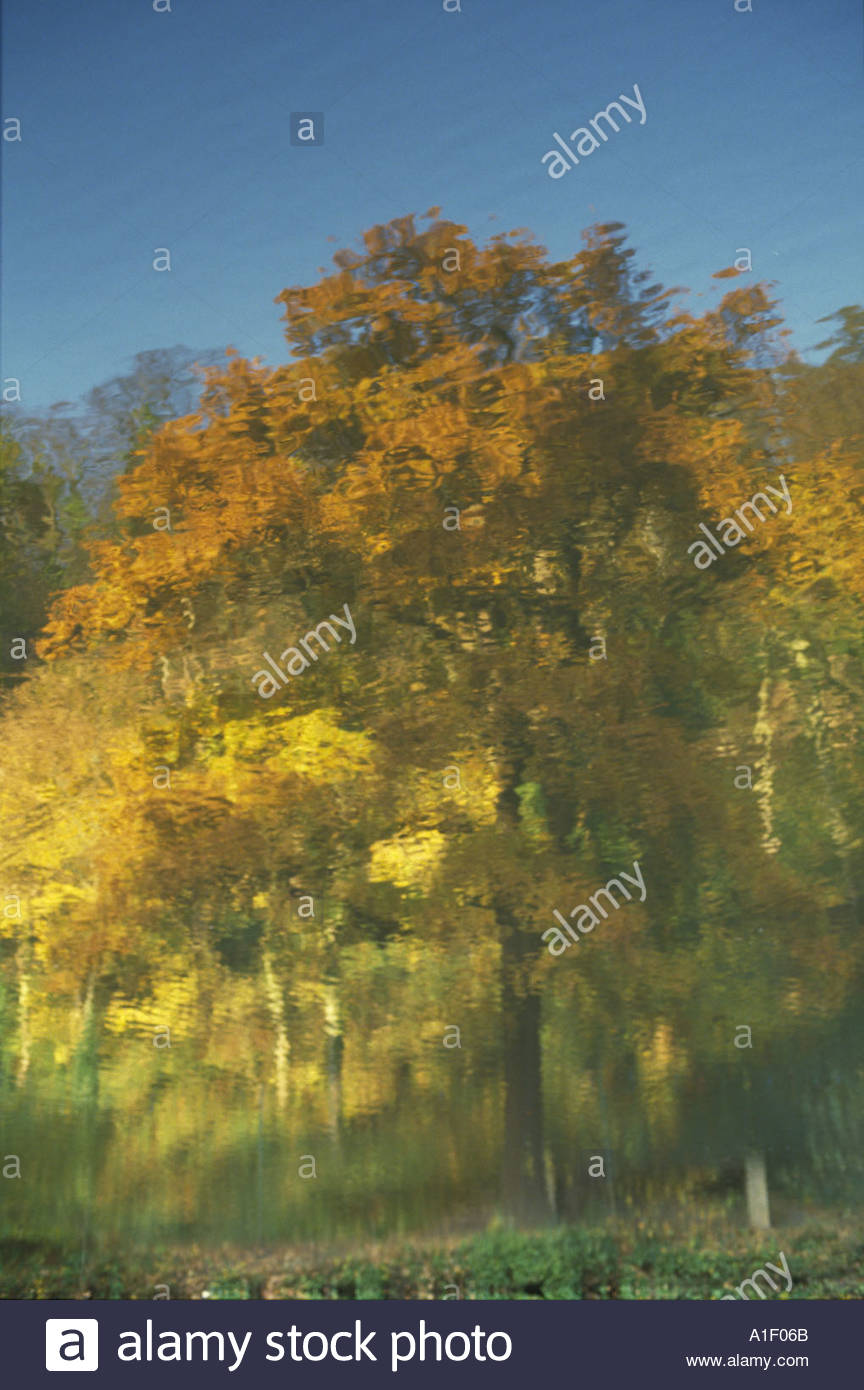 rippling-reflection-of-an-autumn-tree-in