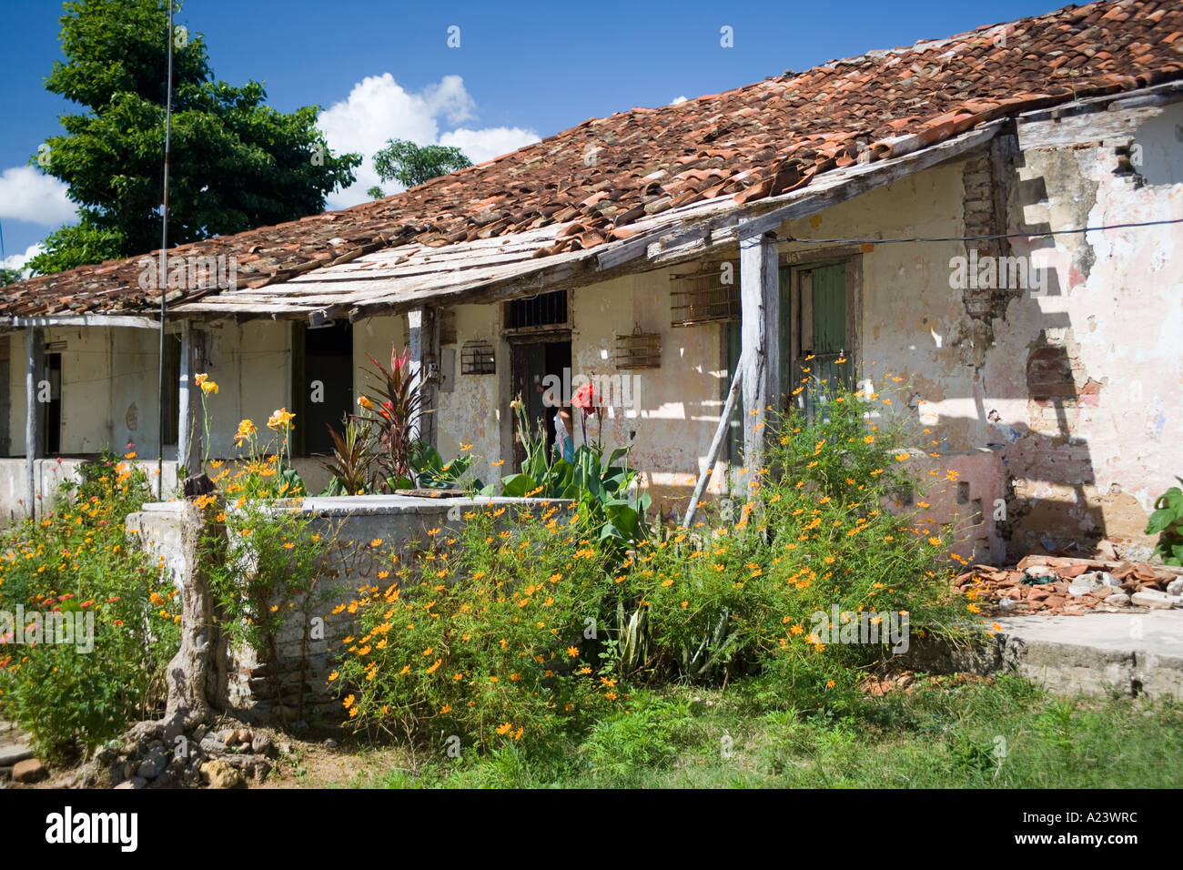 Worker 39 S Houses On The Old Colonial Sugar Plantation Stock Photo Royalty Free Image 5941819