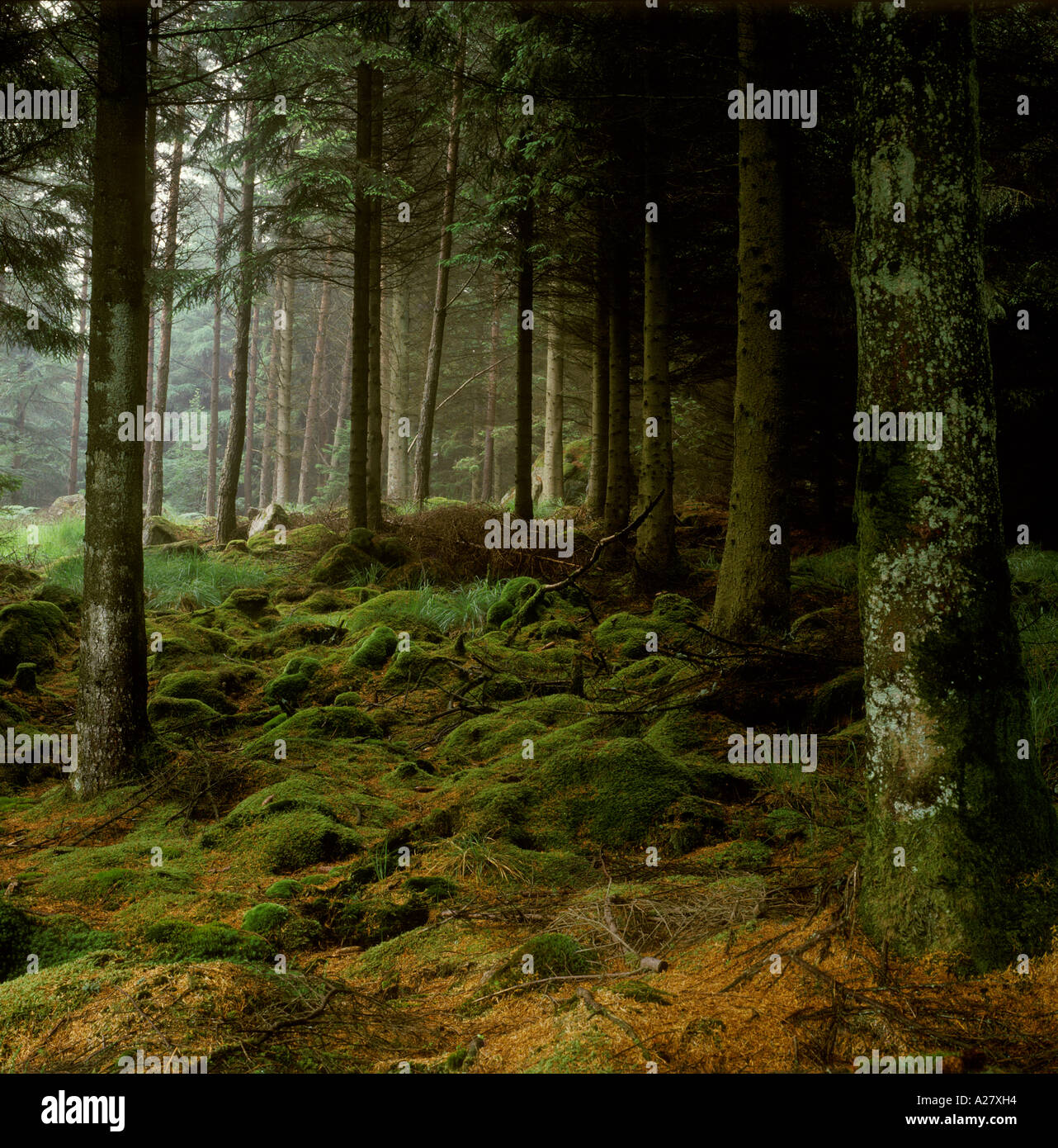 Moss covered rocks in Scottish forest Stock Foto