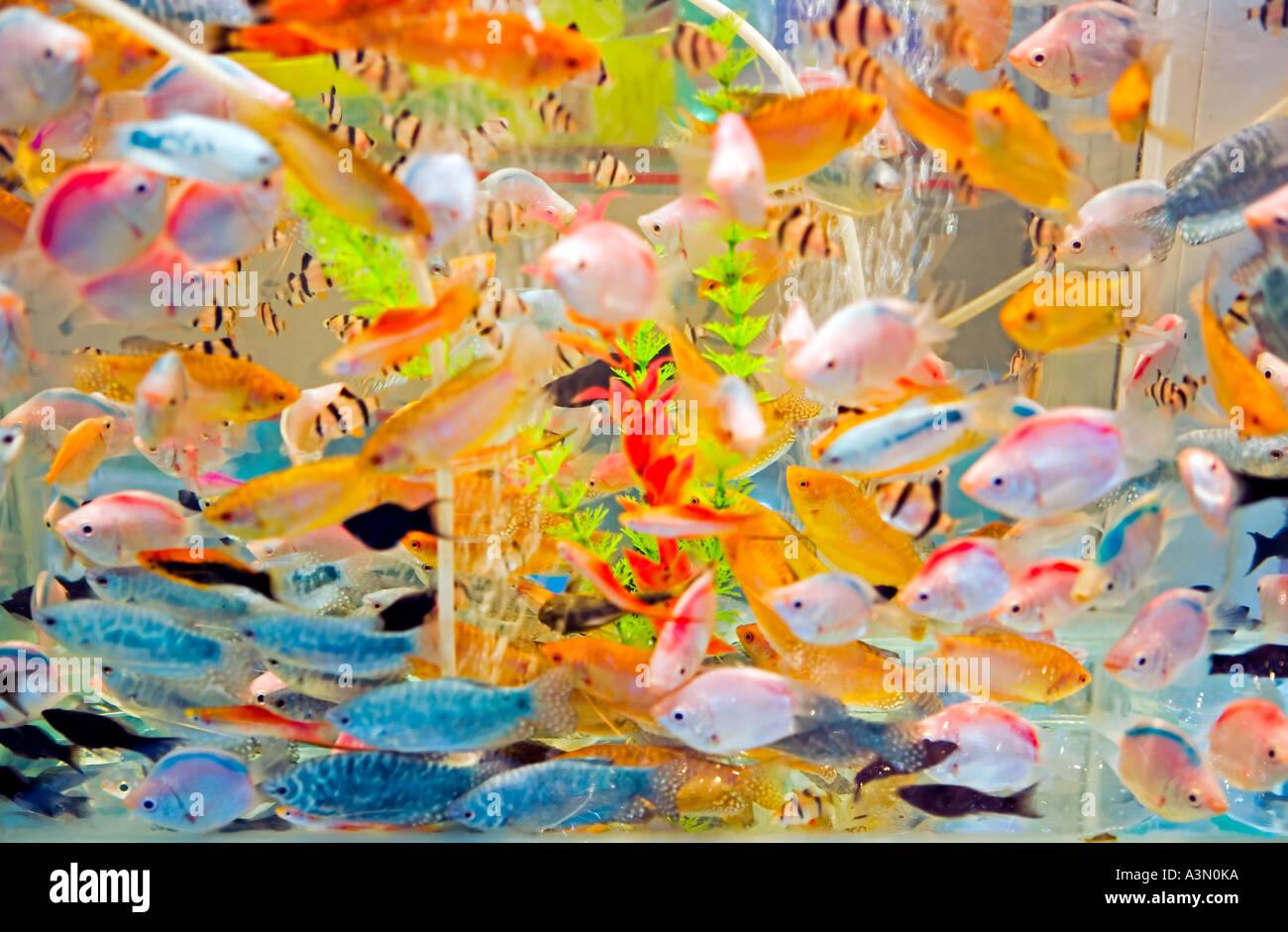China Hangzhou Aquarium Full Of Brightly Colored Tropical