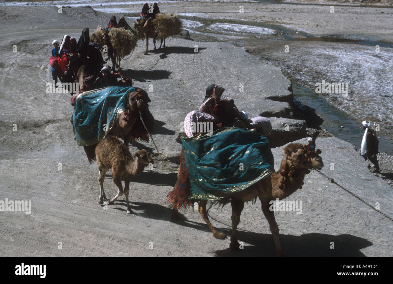the migration and globalization of the silk road The bri, silk road and its metaphor the advent of the mongol empire, though destabilizing to the commercial centers of the middle east and migration and globalization: the silk road china.