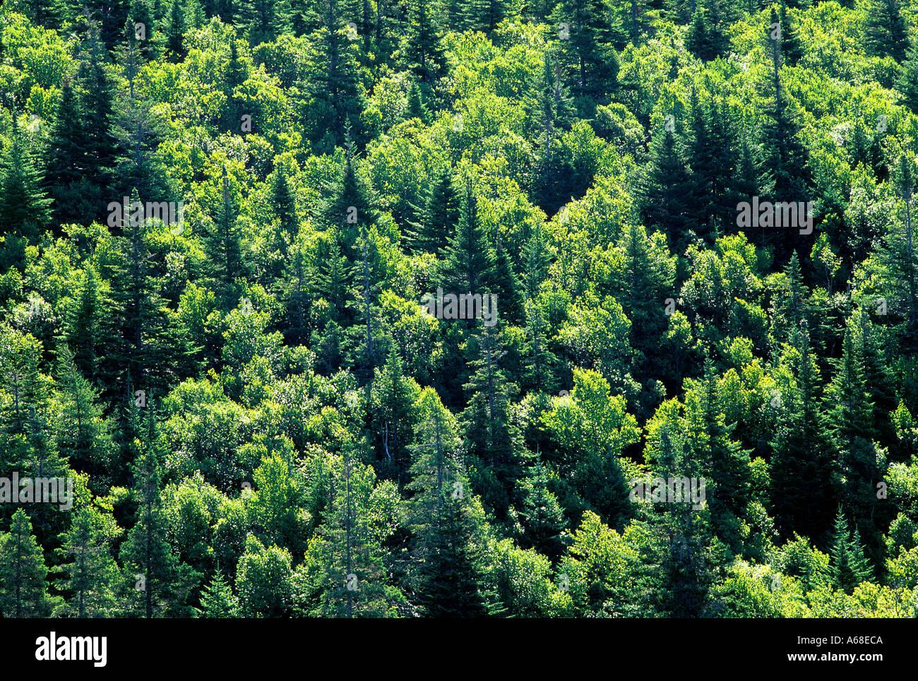 wallpaper canada trees newfoundland - photo #13