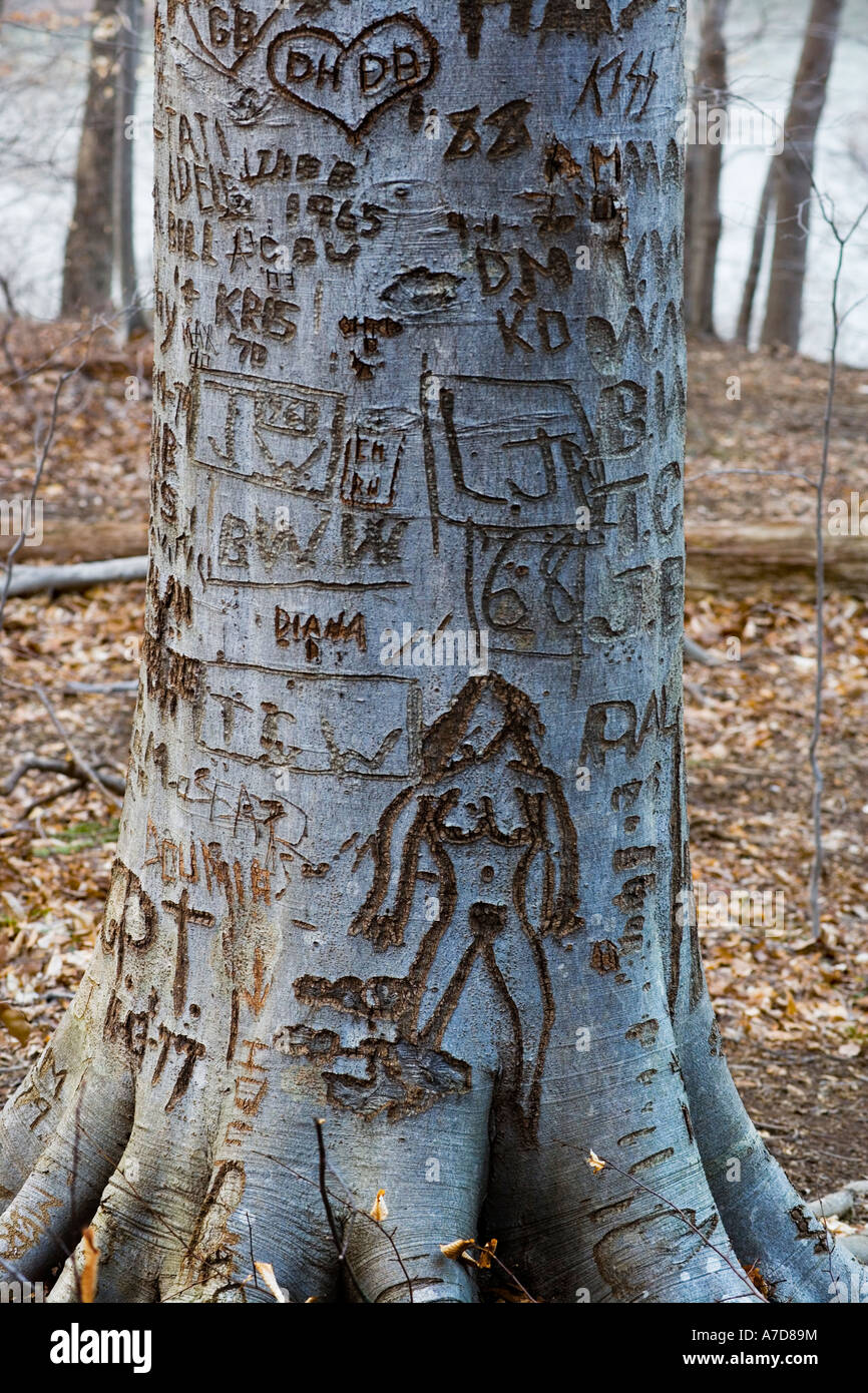graffiti-on-a-tree-with-names-numbers-da