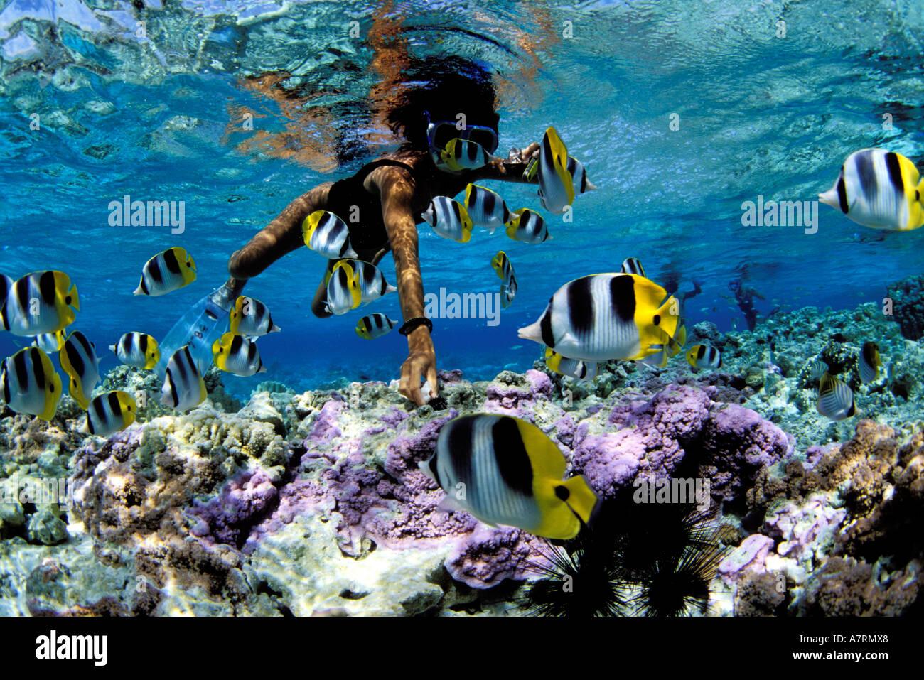 French polynesia society islands bora bora island for Bora bora fish