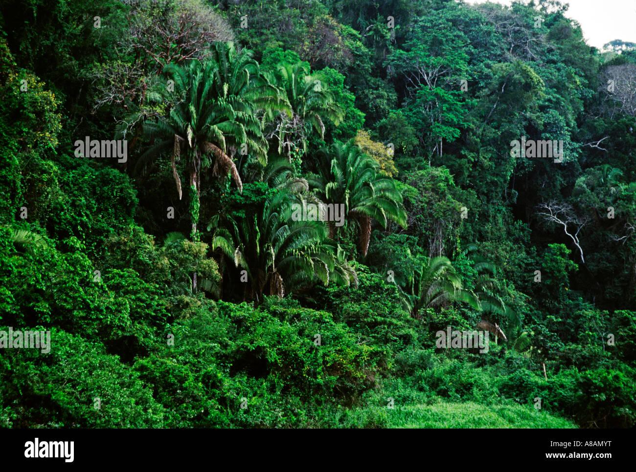 Lush vegetation of the PETEN JUNGLE CEIBAL SEIBAL RUINS GUATEMALA Stock Photo, Royalty Free ...