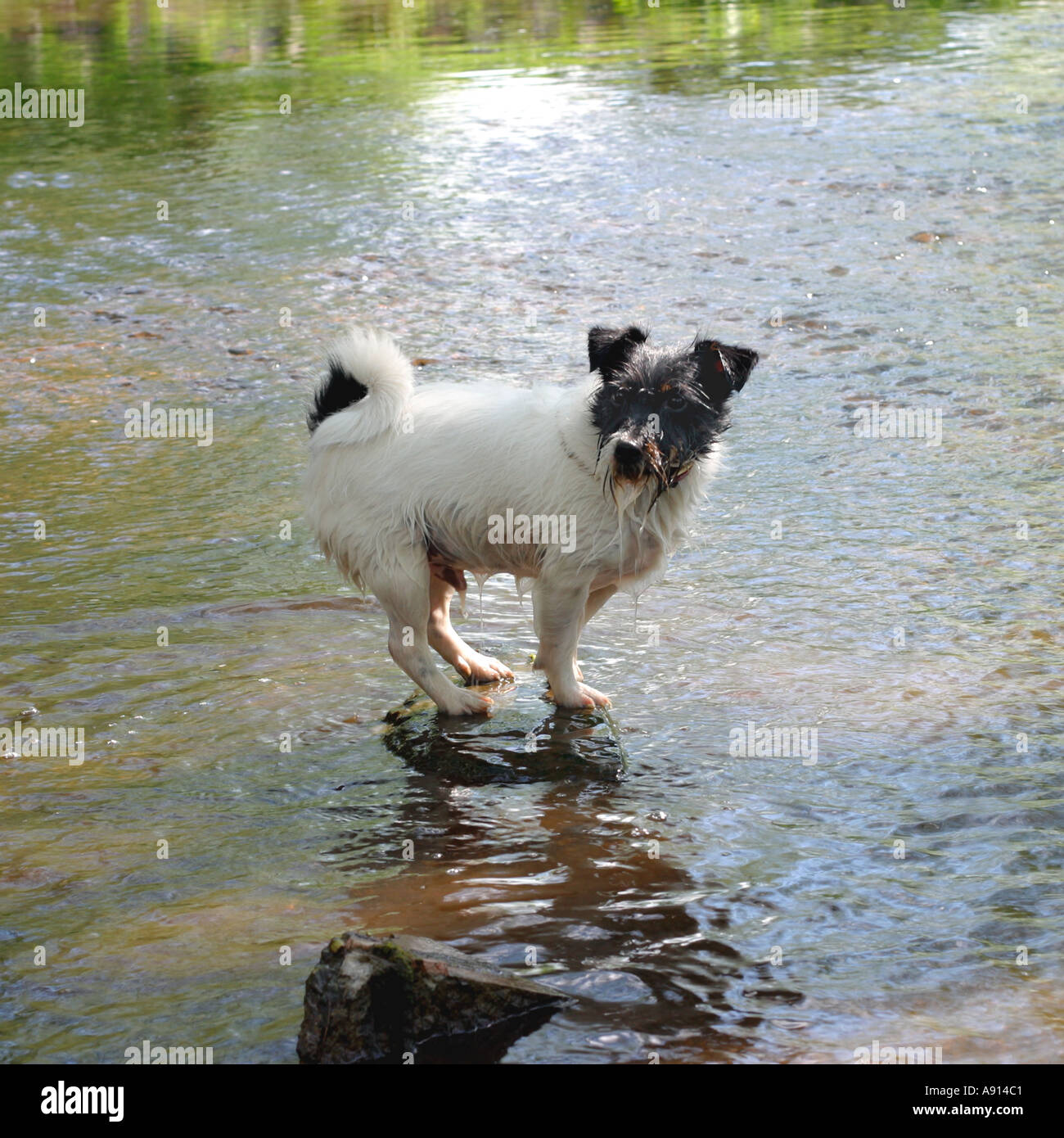 a-small-terrier-stands-on-a-rock-in-the-