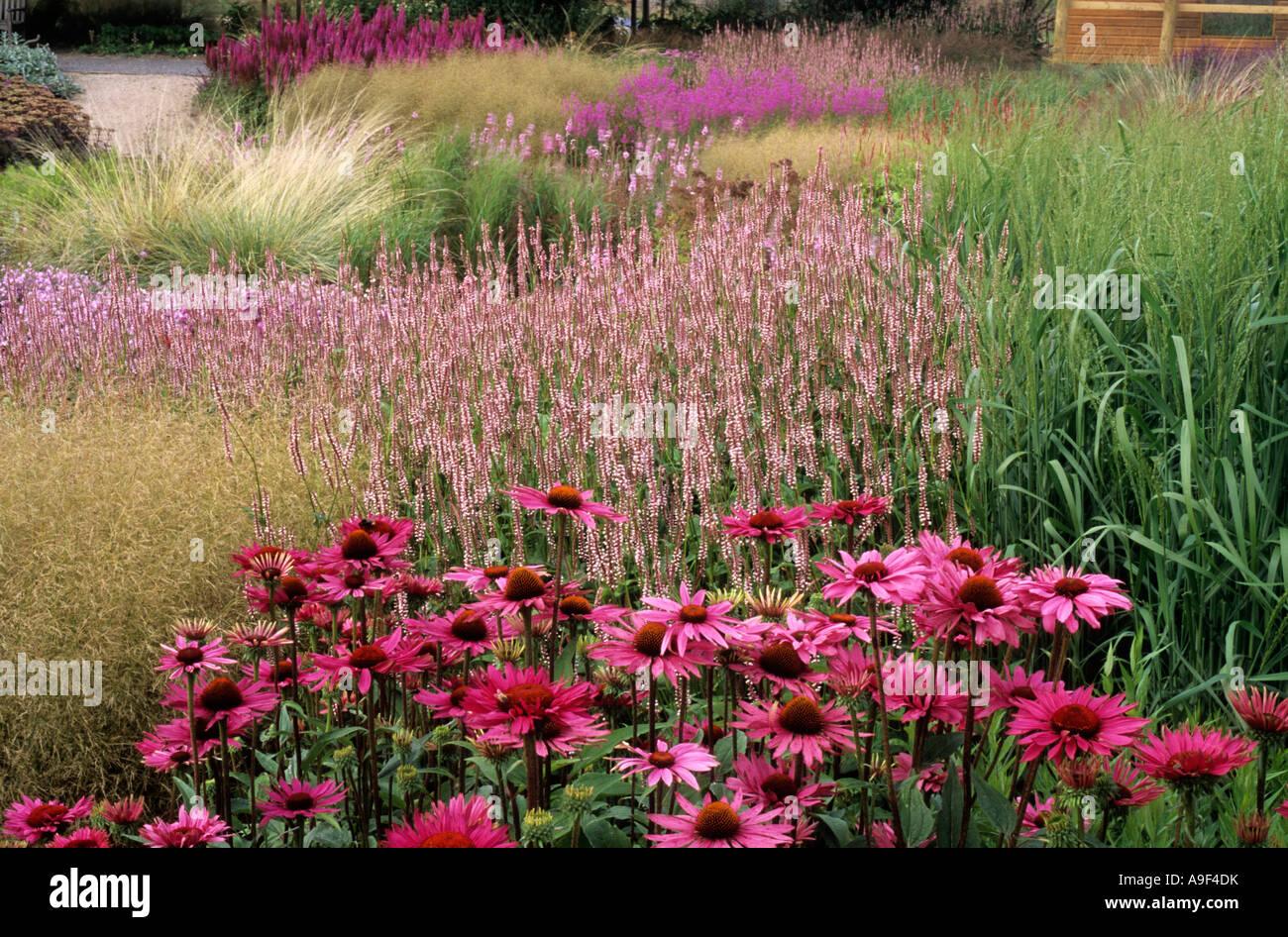 Pensthorpe millennium garden echinacea rubinstern grasses for Planting the natural garden piet oudolf