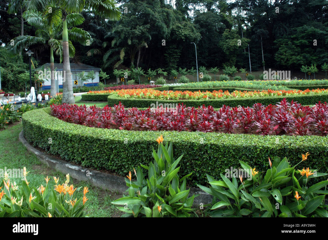 Flower Garden in Malaysia Stock Photo, Royalty Free Image