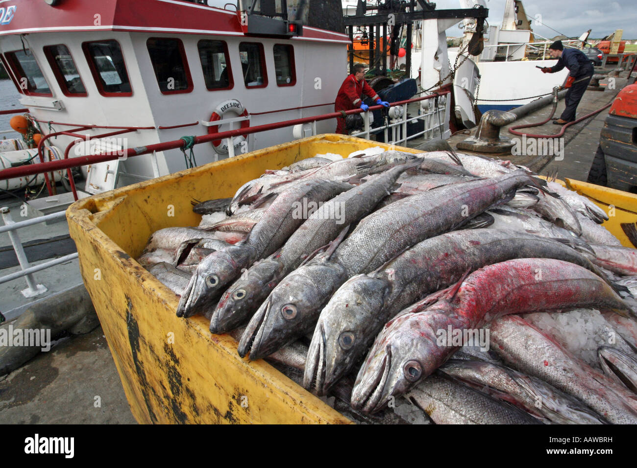 Boxes of fish lined up on the quayside at the white fish port of Peterhead Harbour, Aberdeenshire, Scotland. UK Stock Photo