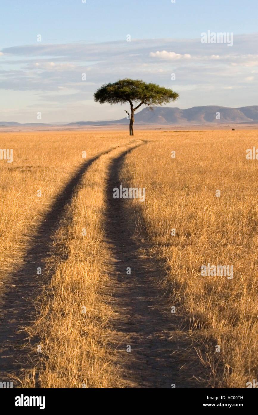 Savanna Landscape Masai Mara Kenya Africa Stock Foto