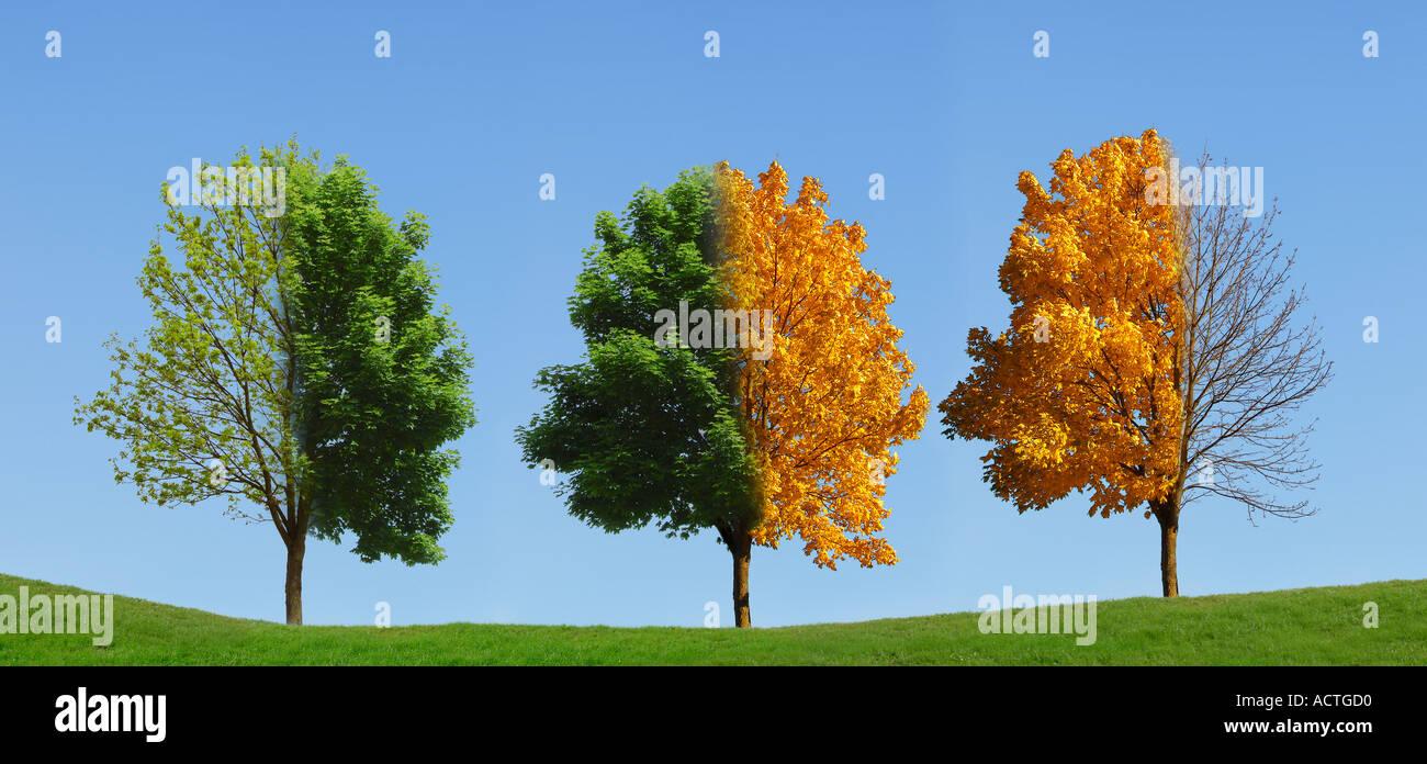 tree 4 seasons baum 4 jahreszeiten stock photo royalty free image 4317391 alamy. Black Bedroom Furniture Sets. Home Design Ideas