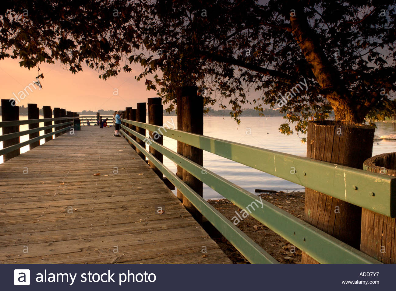 Fishing pier on puddingstone lake frank g bonelli county for Puddingstone lake fishing