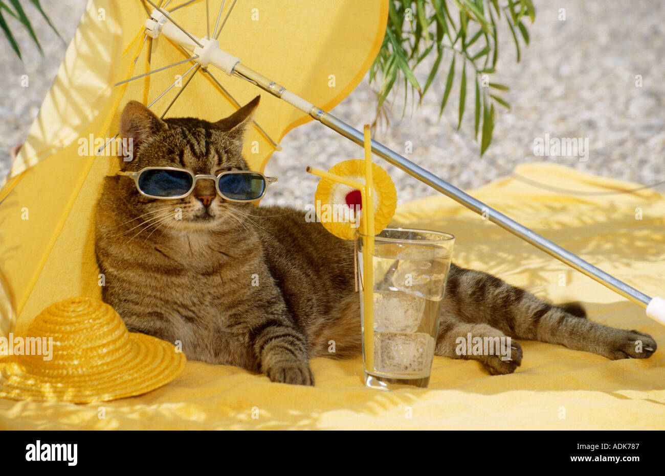 Почему кошка и котенок убегали от чака выпишите предложения
