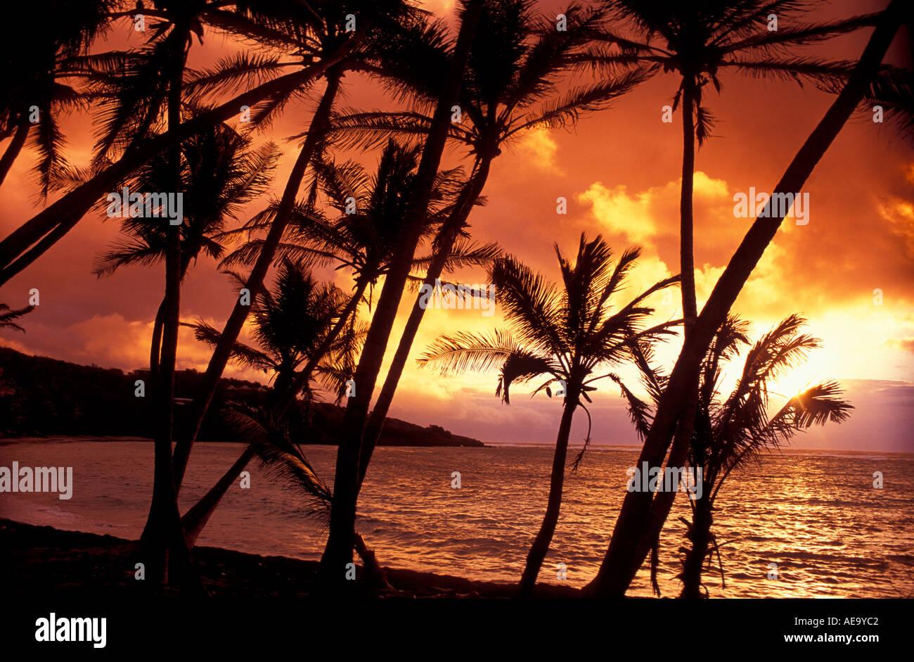 sunrise-through-the-palms-of-industry-ba