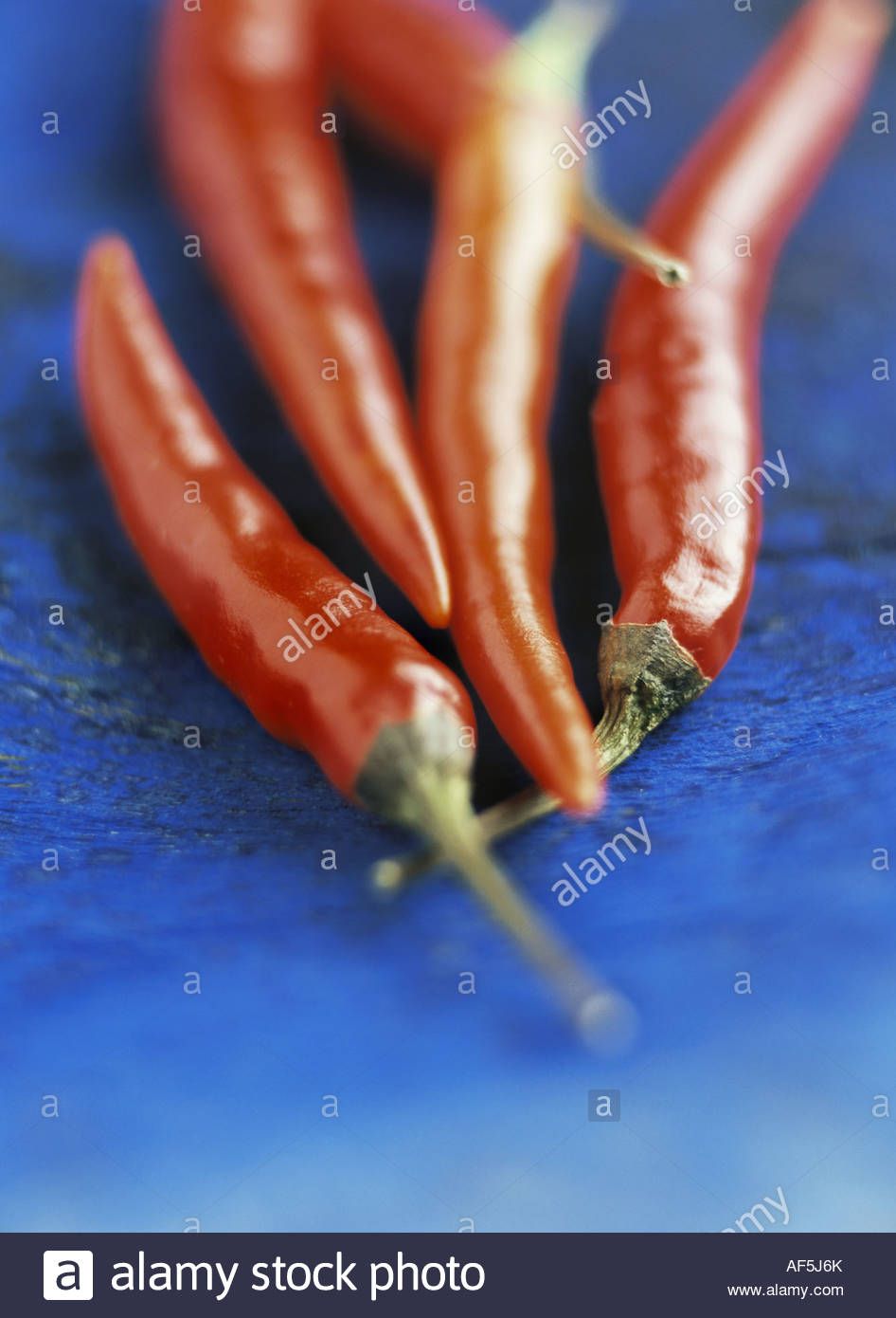 Red chili peppers on blue background Stock Foto