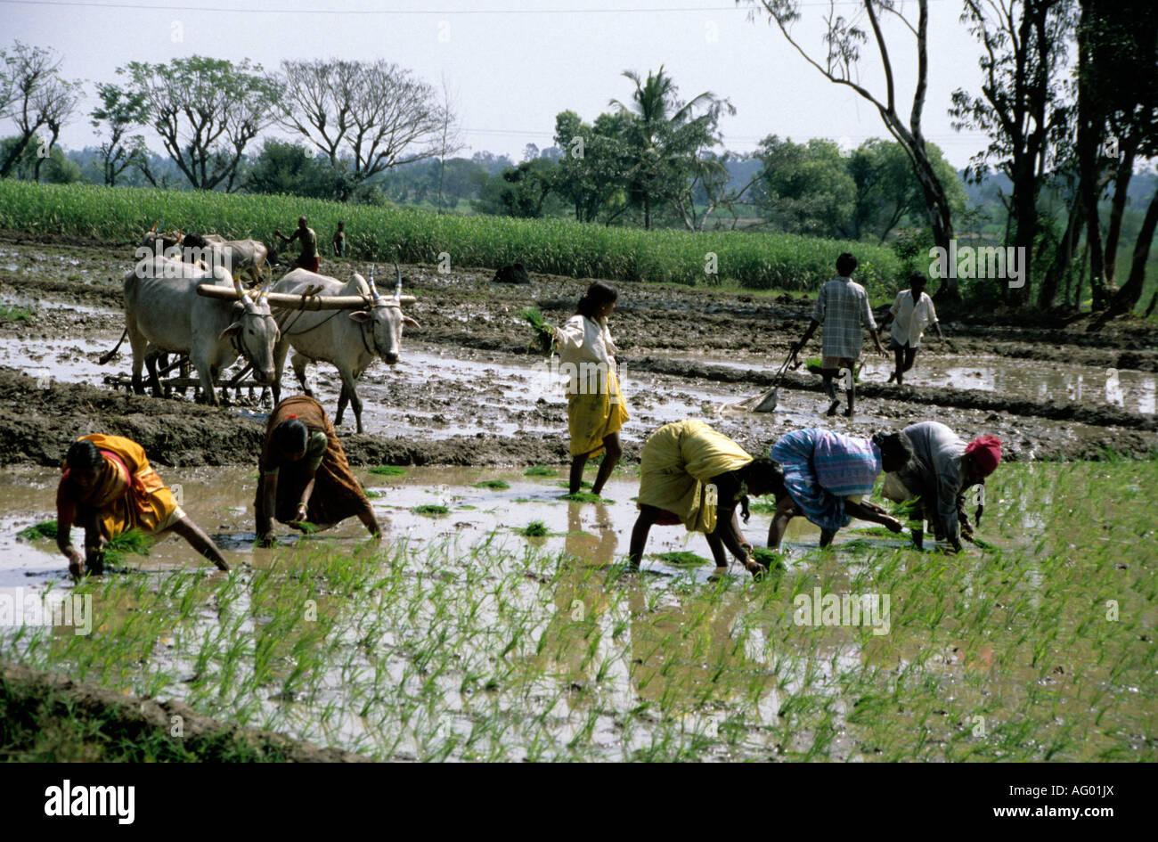 village life in india essay