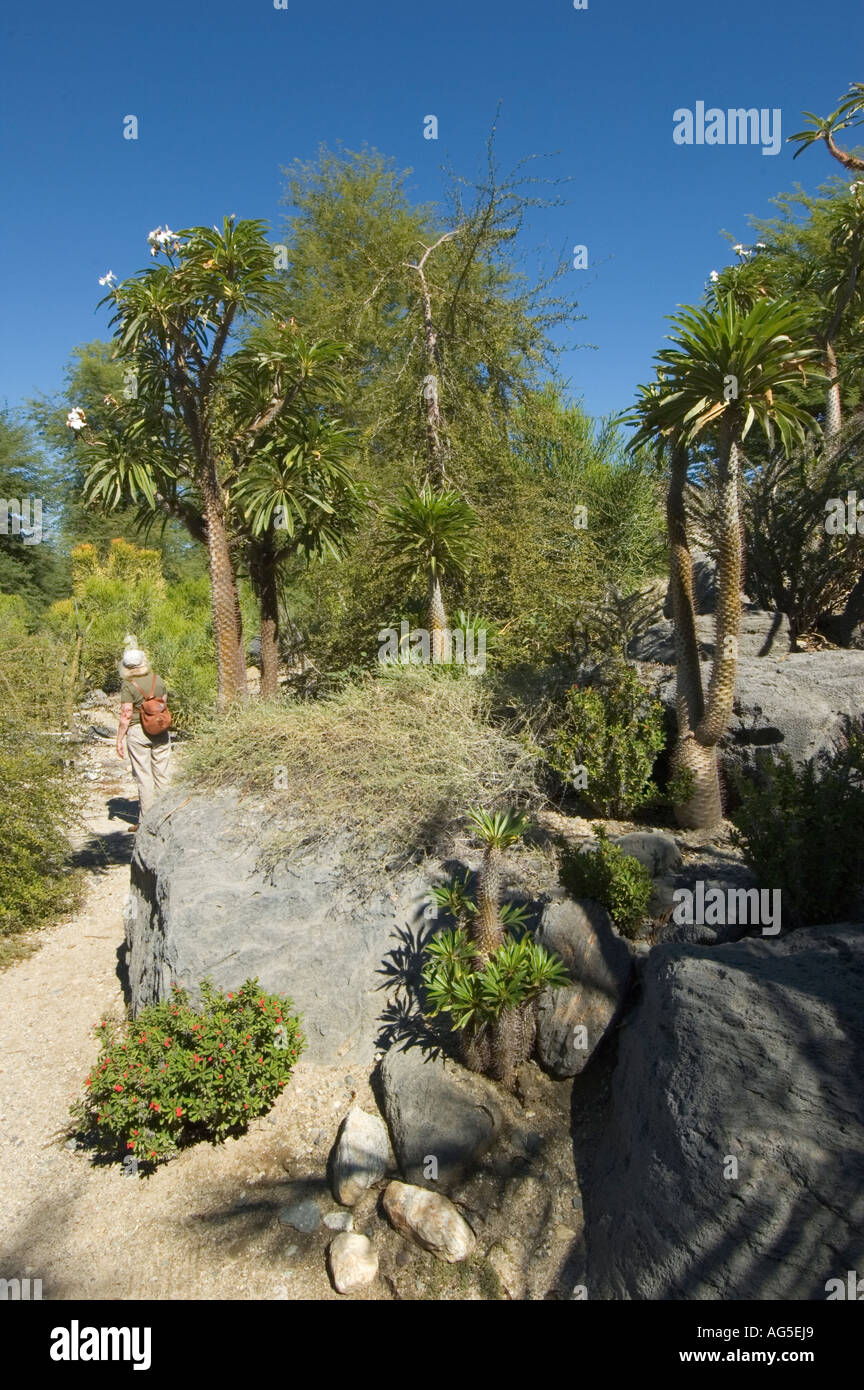 California Palm Desert The Living Desert Zoo And Gardens Madagascar Stock Photo Royalty Free
