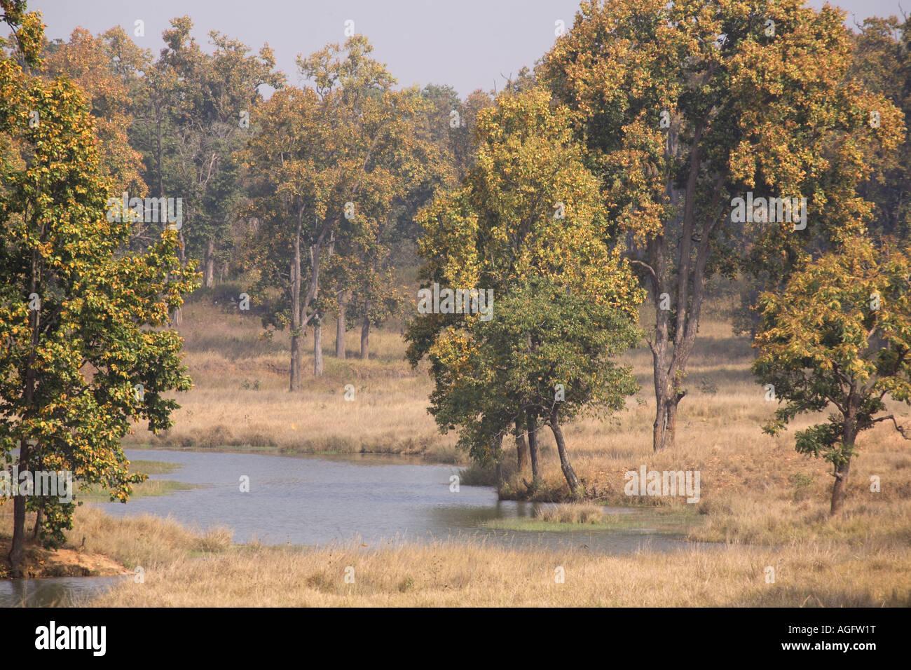 Kanha India  City pictures : India Kanha National Park Kanha Tiger Reserve Grasslands Indian Stock ...