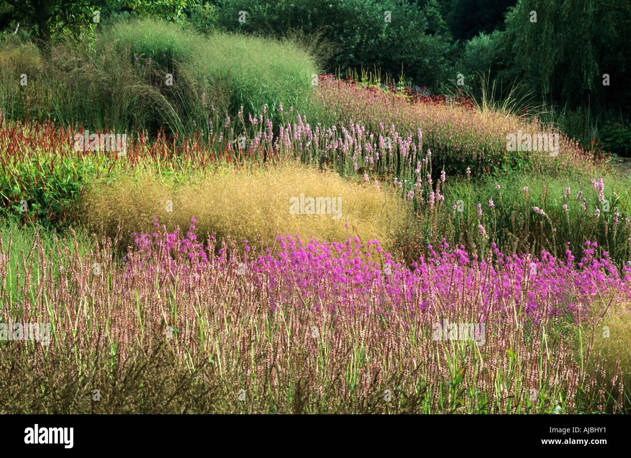 Pensthorpe millenium garden aug sept grasses lythrum piet for Piet oudolf pflanzplan