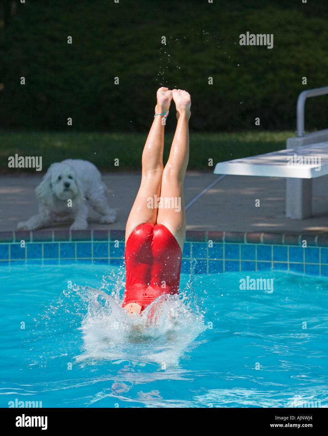 Young Girl Diving Into A Swimming Pool As Her Pet Dog
